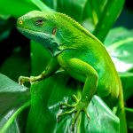 Lizard Brain Syndrome – Do You Care What Others Say?